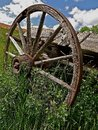 Wooden wagon wheel a wood with spoke and a hub are part of an old left in the long grass Royalty Free Stock Photography