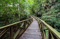 Wooden walk bridge in Niah National Park, Malaysian Borneo Royalty Free Stock Photo