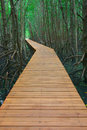 Wooden walkway Stock Photo