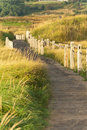 Wooden walkway through the dunes Stock Photography
