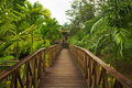 Wooden Walkway Jungle Sepilok Borneo Stock Photos