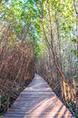 Wooden walkway at nature trail mangrove forest Stock Images