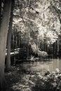 Wooden walkways at swan lake and iris gardens in black white Stock Photo