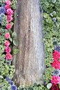 Wooden wall with flowers Royalty Free Stock Photo