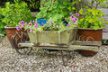 Wooden wheelbarrow containing trailing surfina petunia plants Royalty Free Stock Photography