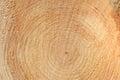 Woodgrain close up texture of wood tarred veining Royalty Free Stock Photos
