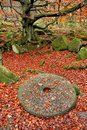 Woodland Autumn Millstone Stock Photography