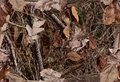 A Woodland Camouflage Pattern for hunting purposes Royalty Free Stock Photo