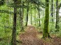 Woodland path leading through dense green at hart woods in cornwall Stock Images
