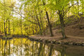 Woodland Pond Background