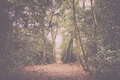 Woodland scene at the start of autumn Vintage Retro Filter. Royalty Free Stock Photo