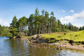 Woodland scene Tarn Hows Lake District National Park England uk on a beautiful sunny summer day Royalty Free Stock Photo