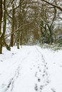 Woodland in snow trees wood england winter with and footprints on ground Stock Photo