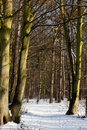 Woodland snowy path Royalty Free Stock Photography