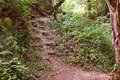 Woodland steps on a forest walk Royalty Free Stock Photo