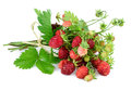 Woodland strawberry with leaves on white. Royalty Free Stock Photo