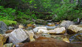 Woodland stream a in a wooded area in british columbia canada Stock Photography