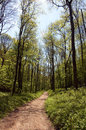 Woodland walk in early summer english as the begins Royalty Free Stock Photography
