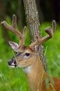 Woodland Wonder Royalty Free Stock Photo