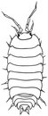 Woodlouse - monochrome vector drawing Royalty Free Stock Photo
