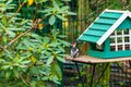 A Woodpecker Gathers Food From A  Bird House And Sits On A Table Next To The House