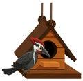 Woodpecker standing on birdhouse