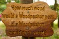Woodpecker tongue twister wooden sign with a wood pecker rhyme carved into it at rushcliffe country park nottinghamshire england Stock Photography