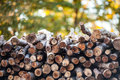 Woodpile with colorful background Royalty Free Stock Photo