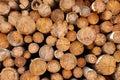 Woodpile of cut Lumber Royalty Free Stock Photo
