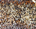 Woodpile of firewood in a garden close up sunny day Stock Photos