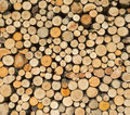 Woodpile with round firewood Royalty Free Stock Photo