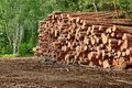 Woodpile From Sawn Pine And  Spruce Logs For Forestry Industry Royalty Free Stock Photo