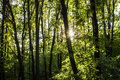 Woods forest. trees background. green nature landscape. wilderness Royalty Free Stock Photo
