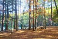 Woods picnic are autumn colors Royalty Free Stock Photo