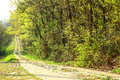 Woods road Royalty Free Stock Photo