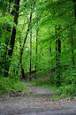 woods and shady path Royalty Free Stock Photo