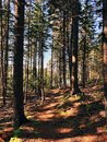 The woods trail in Boothbay Royalty Free Stock Photo