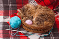 Wool blanket and a cat knitting needles balls in basket Stock Image