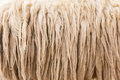 Wool sheep closeup Royalty Free Stock Photo