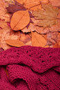 Woolen scarf autumn fall leaves and red Stock Image