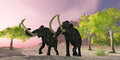 Woolly mammoth morning a rosy finds two mammoths searching for better vegetation to eat Stock Photography