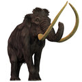 Woolly mammoth on white mammoths are extinct herbivorous mammals that lived from the pleistocene to the holocene periods Royalty Free Stock Photo