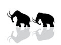 Wooly mammoth silhouette silhouettes over white background Royalty Free Stock Image
