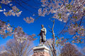 Wooster square in new haven cherry blossom at Stock Photos