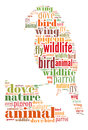 Word cloud of bird isolated on white background Royalty Free Stock Photos