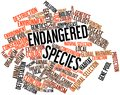 Word cloud for Endangered Species Royalty Free Stock Photo