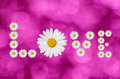 The word love made in daisies flower on pink background Royalty Free Stock Photography