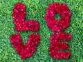 Word of love made from red rose petals on green grass field Royalty Free Stock Photos