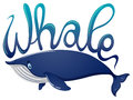 Word for whale and blue whale on white background