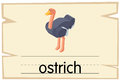 Wordcard template for ostrich